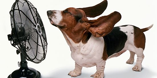 How Do Dogs Sweat?