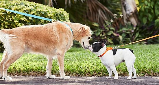 How to Socialise Your Puppy and Why It Is Important
