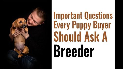 Buying A Puppy – The Most Important Questions To Ask The Breeder