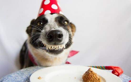 How To Celebrate Your Dogs Birthday!